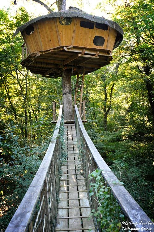 1000 Images About Tree Top Treasures On Pinterest Trees A Tree And