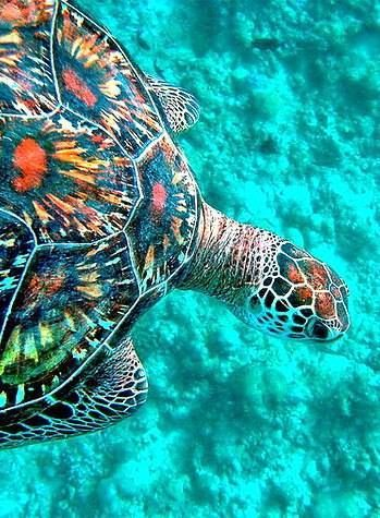 sea turtle. How amazingly perfect these creatures are