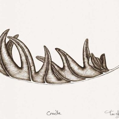 The cradle's nature is to nurture, fronds receiving and holding safe. Fine line drawing by artist Tim de Groot
