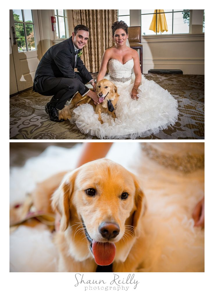 This golden retriever came to the wedding in a tie.  NJ Wedding