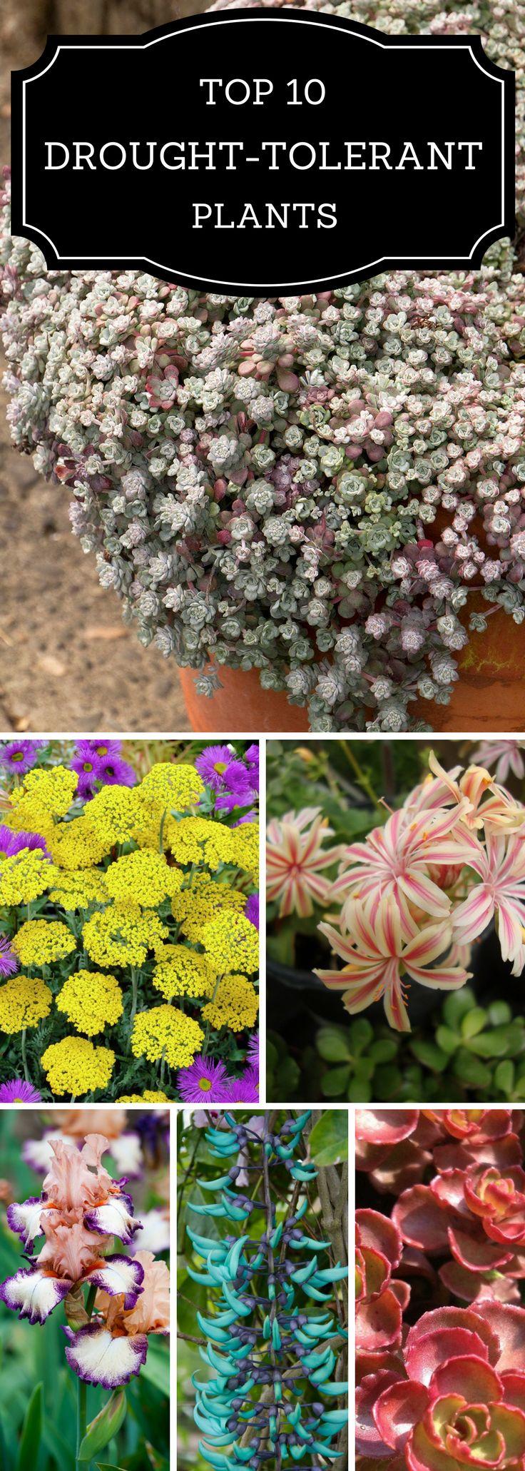 Top 10 Drought - Tolerant Plants