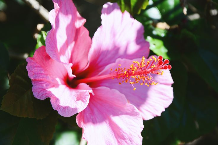 Pink's beauty - Flower and lights of this wonderful brazilian spring