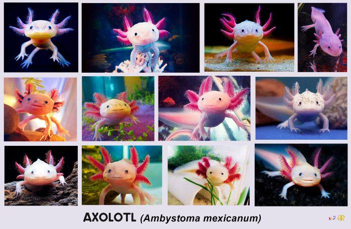Axolotl Cuteness Compilation