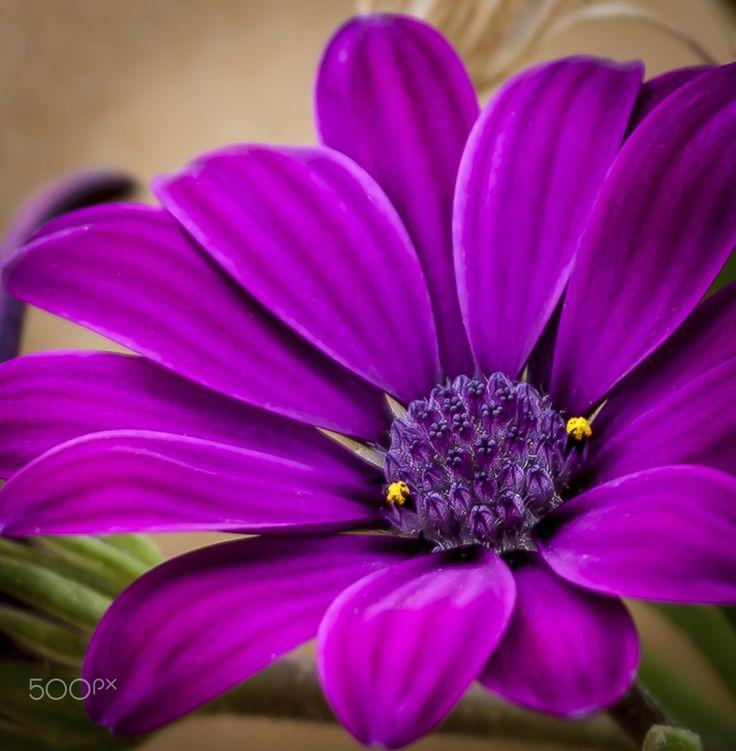 Purple Flower - Beautiful purple flower