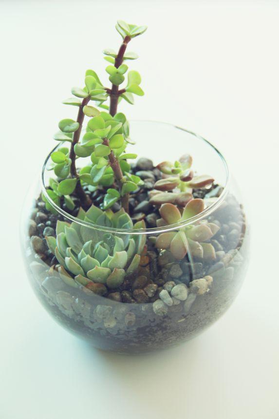 ...: Gardens Ideas, Cactus Succulents, Succulent Gardens, Cool Ideas, Succulent Terrarium, Diy Projects, Inside Green, Bowls