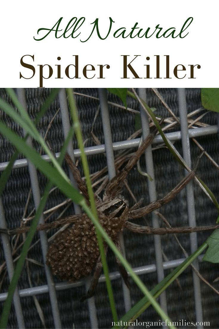 spider-killer