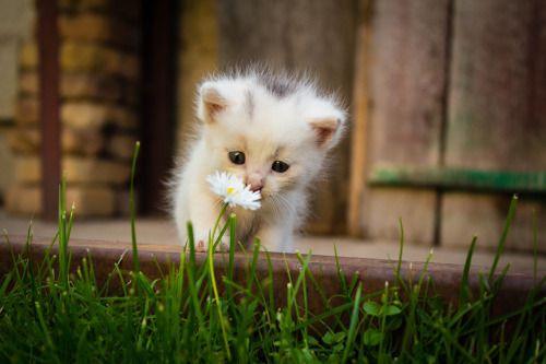 Kitten ( via Dmitriy Divnov )