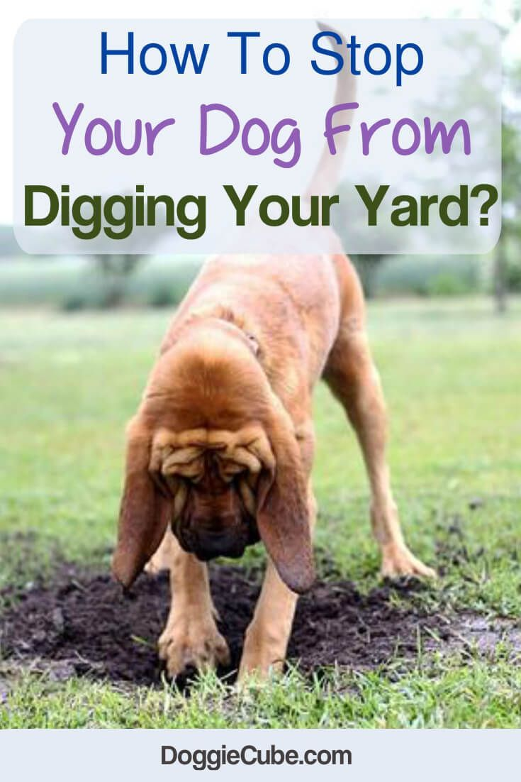 How To Stop Your Dog From Digging Your Yard Digging Dogs Dogs Training Your Dog