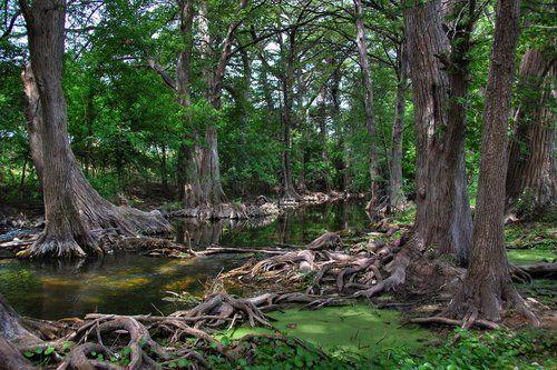 Cibolo Creek at the Cibolo Nature Center, Boerne, Texas