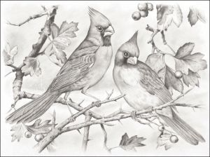 Cardinal - Coloring Pages & Pictures - IMAGIXS by cindie.taylorpamula