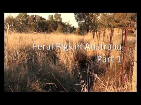 Feral Pig focus informative website with YouTube clips, fact sheets and interactives.