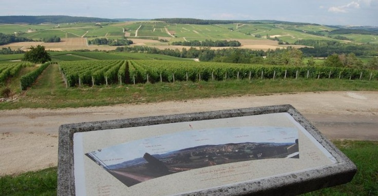Best's has a partnership with a French winery called Huguenot-Tassin. We are currently selling our partnership Champagne at Cellar Door. This is a pic of the area in France where the winery is located.