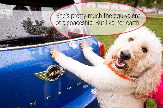 The One with a Car   17 Animals Who Are Smooth Operators