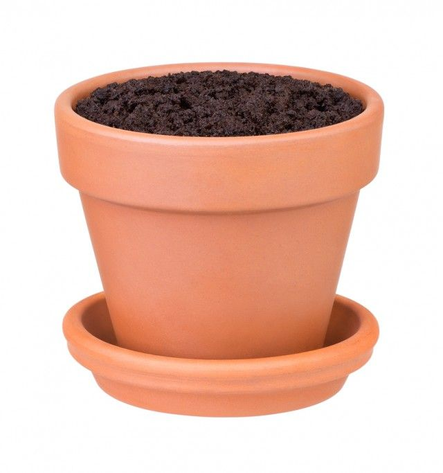 Pot and soil large enough to grow a chilli plant in