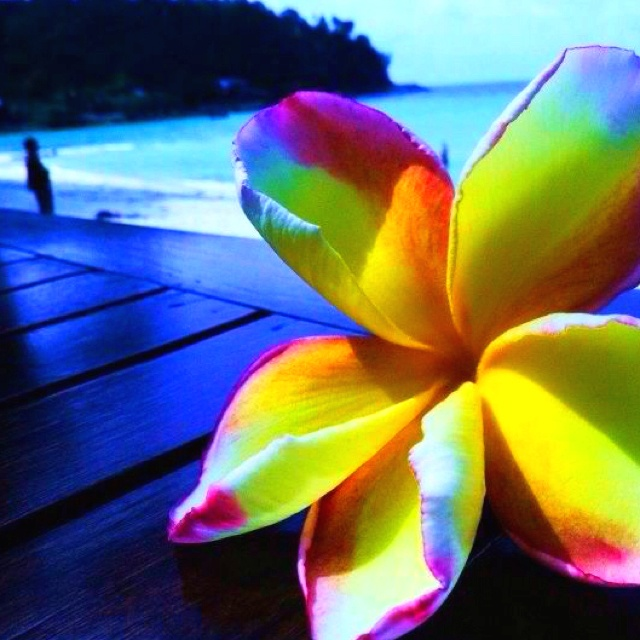 Koh Phangan, ThailandTravel Photos, Favorite Travel, Koh Phangan, Ultimate Trips, Bali Dreamin, Trips Life