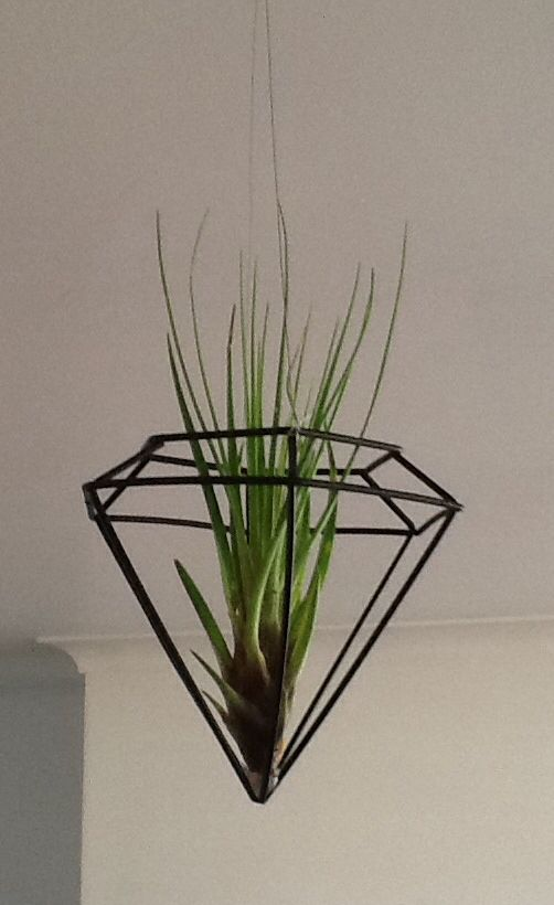 Art Deco Air plant..