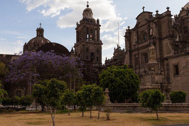 Innenhof bei der Kathedrale von Mexico City mit blühendem Jacaranda-Baum / Mexico City Metropolitan Cathedral