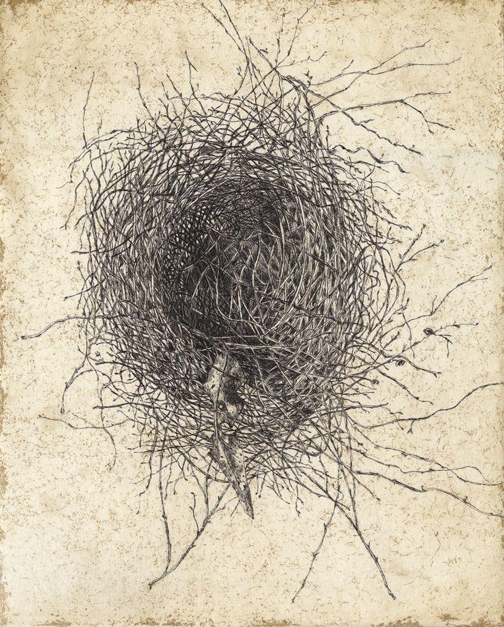 Noisy Miner nest etching Artist Sandi Rigby