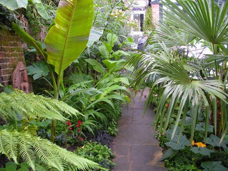 103 besten exoten bilder auf pinterest tropische pflanzen tropischer garten und landschaftsbau. Black Bedroom Furniture Sets. Home Design Ideas
