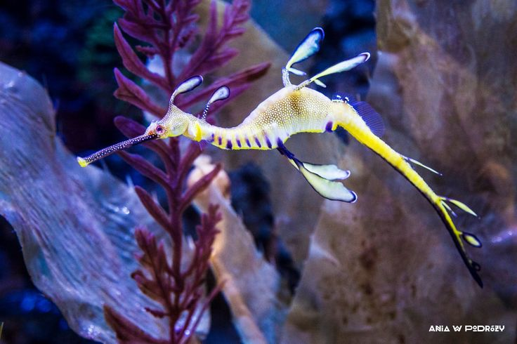 The funniest creature EVER? At Dubai Aquarium and Underwater Zoo. ANIA W PODRÓŻY travel blog and photography