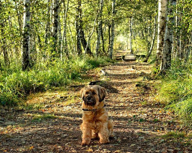 Правильный уход за собакой. Домашние животные являются полноценными членами семьи – так думают практически все люди, которые держат у себя любимого питомца. Но зачастую люди не думают о том, что «новый член семьи» также, как и другие, нуждается в профилактике заболеваний, в чистоте, в здоровом психологическом климате, в свежем воздухе, в сбалансированном питании и в отдыхе. Следует идти в ногу со временем и использовать передовые достижения науки и техники, чтобы любимцы были здоровы и…