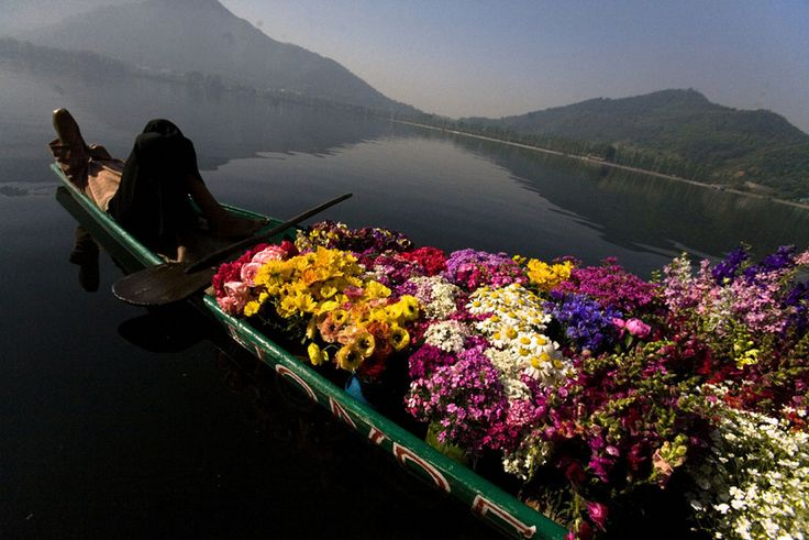 Flower vendor waiting for tourists in Dal lake.