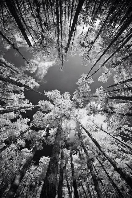 Lay on the ground and look up at this, I could look at this for hours:)