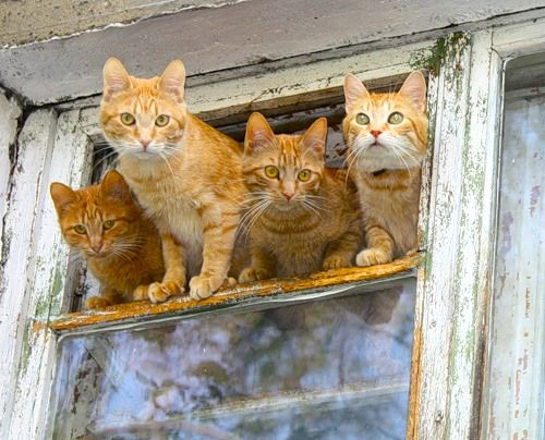 The red cat gang is here and we are looking out on the world to make sure we know all that is going on.