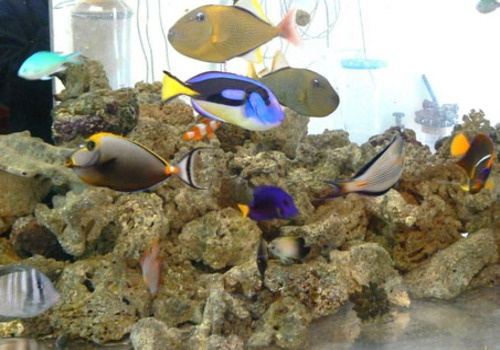 ... Aquarium on Pinterest Salts, Fish aquariums and Saltwater aquarium
