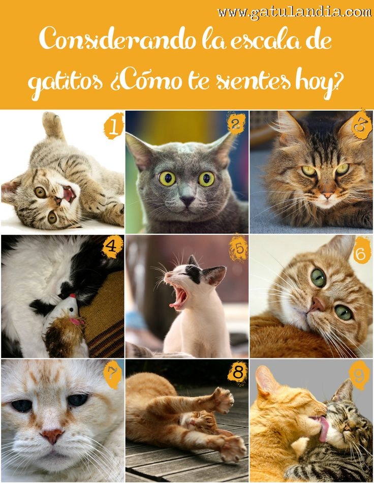 Considereando la escala de Gatitos ¿Cómo Te sientes Hoy?