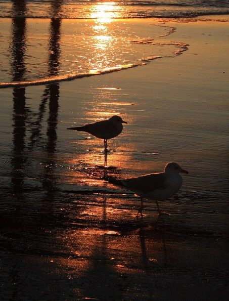 Sunset Beach - Sunset Beach, North Carolina