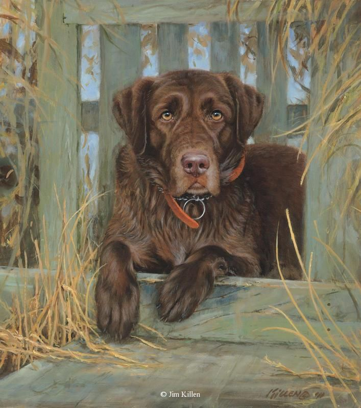 Bud Chocolate Labrador <br> Canvas Giclee 14 x 16