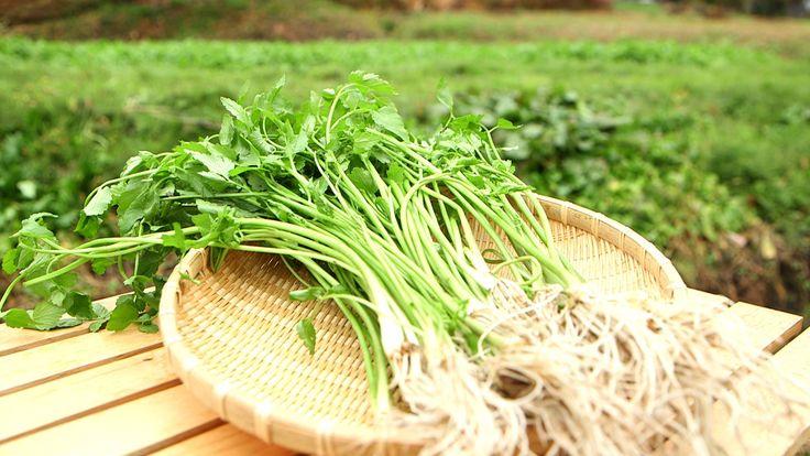収穫:10月~3月 「三関せり」は、湯沢市三関地区で栽培される、白く長い根が特徴のせり。 三関地区は近くの山からきれいな湧き水が流れ込むため、せりの栽培に適しています。 白い根っこは出荷までに3回洗って土を落とす作業が欠 …