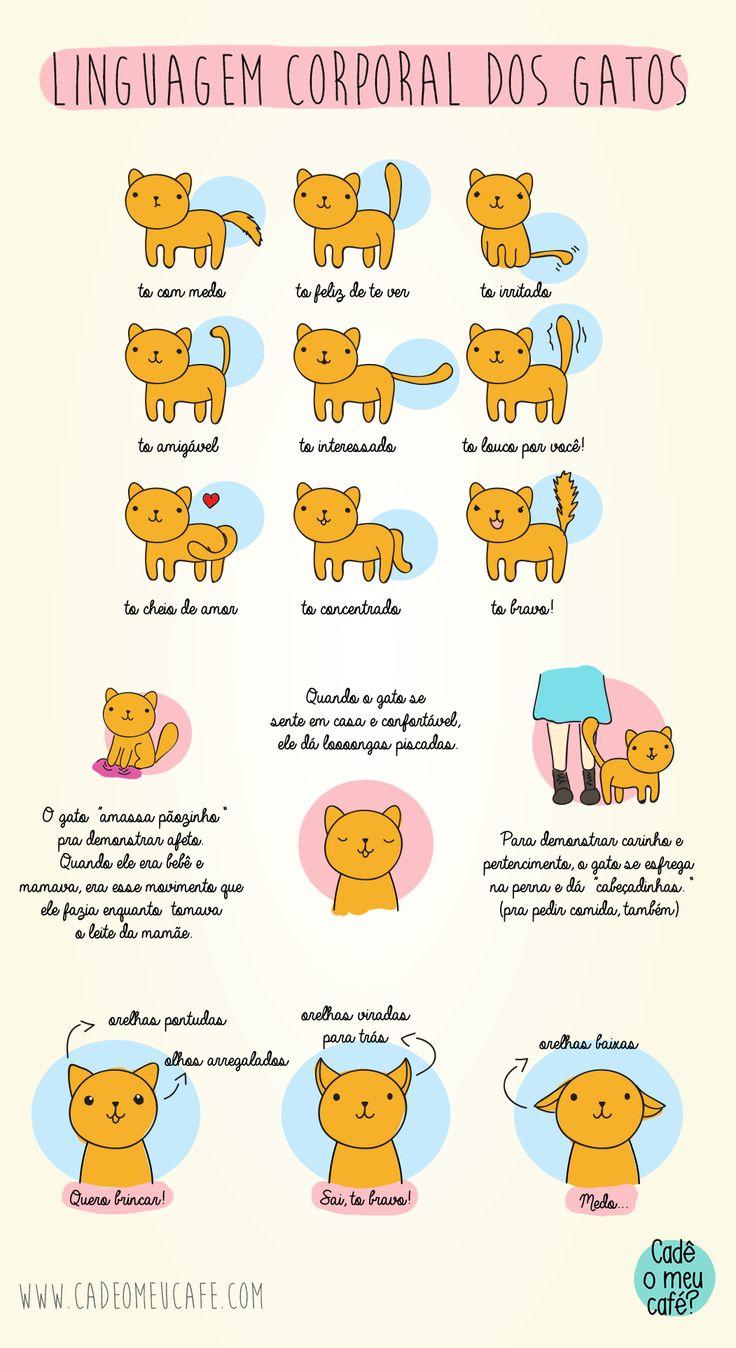 Linguagem corporal gatos