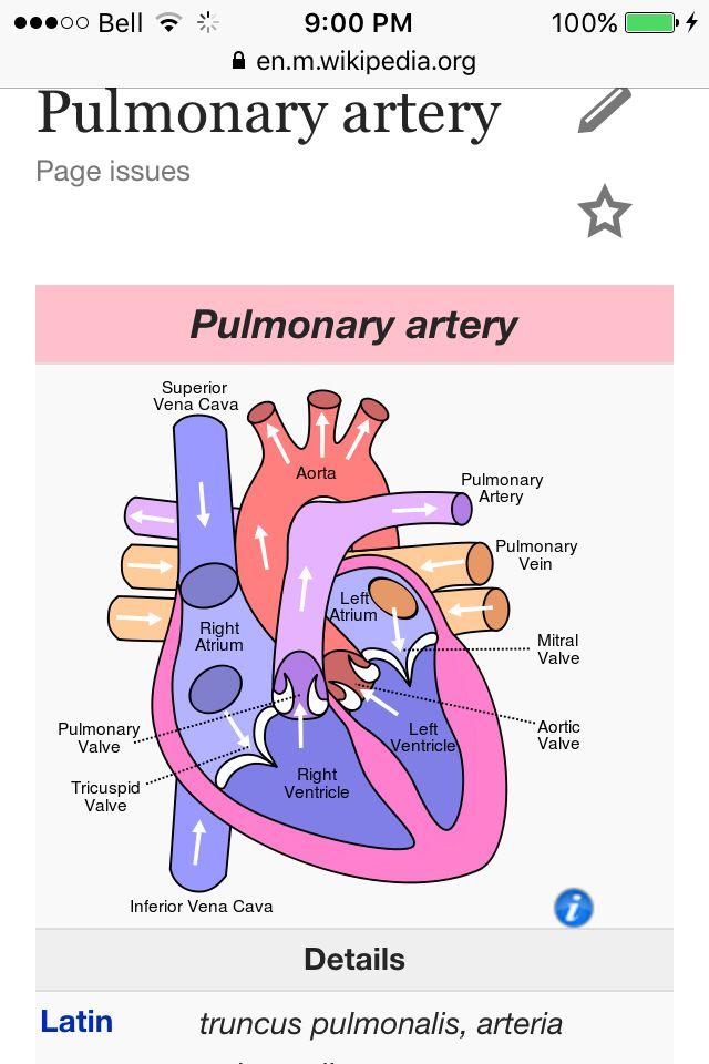 Pulmonary artery | Parts of the heart, Human heart diagram ...