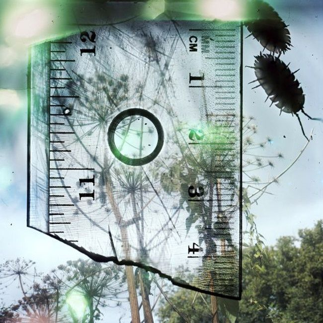 "SUPERIMPOSED REALITY, IN SERIES ""TALKING TO THE ANTS"" BY STEPHEN GILL"