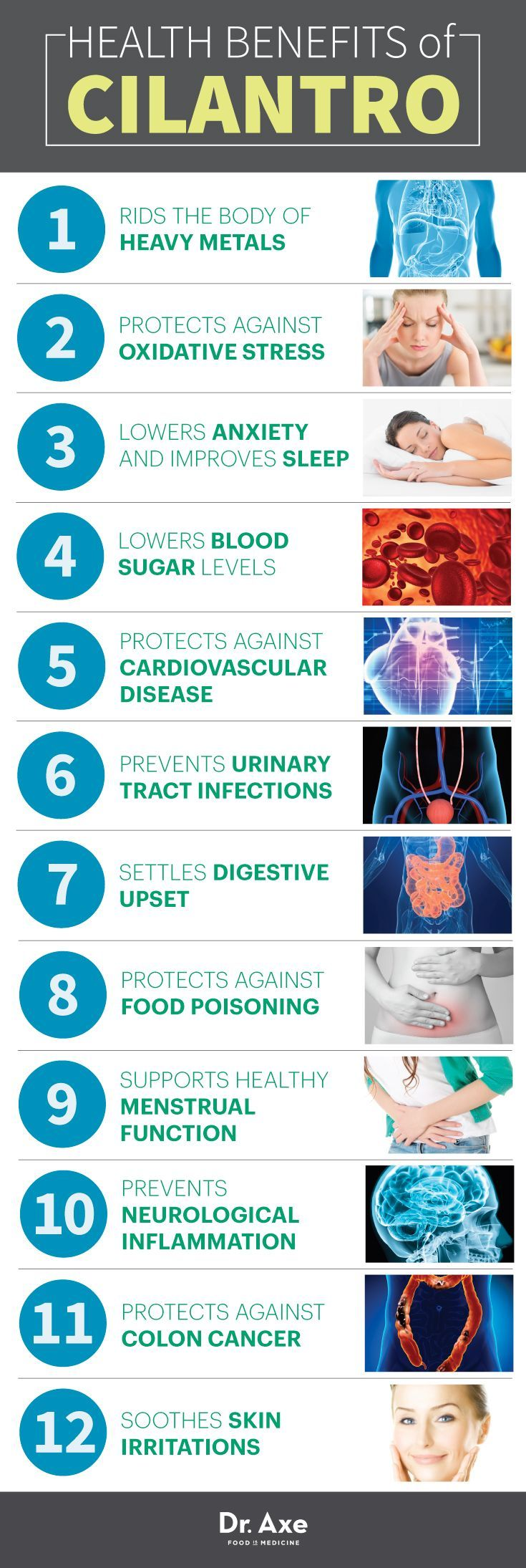 12 Cilantro Benefits, Nutrition & Recipes – Steve at Good Habits, Self Help & Mindful Living
