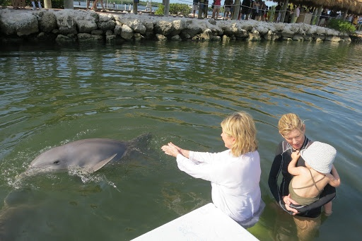 The dolphins and sea lions at the Center live in ninety thousand square feet of pristine seawater lagoons with low fences separating them from the open waters of the Gulf of Mexico.  A natural tidal flow flushes the lagoons daily.