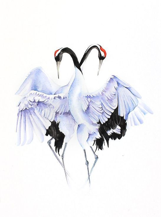 Buy CRANES LOVE DANCE  bird, birds, animals, wildlife watercolour painting, Watercolour by Karolina Kijak on Artfinder. Discover thousands of other original paintings, prints, sculptures and photography from independent artists.