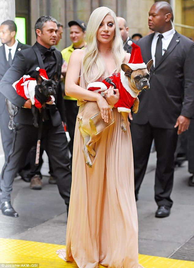 Festive fur babies: Lady Gaga and fiancé Taylor Kinney were seen leaving Cipriani 42nd St ...