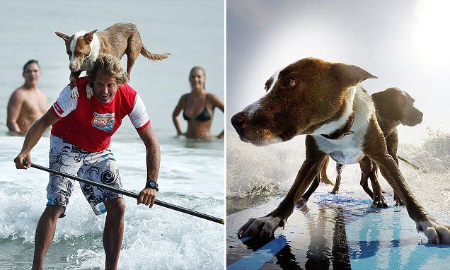 World champion makes waves by surfing with his DOGS