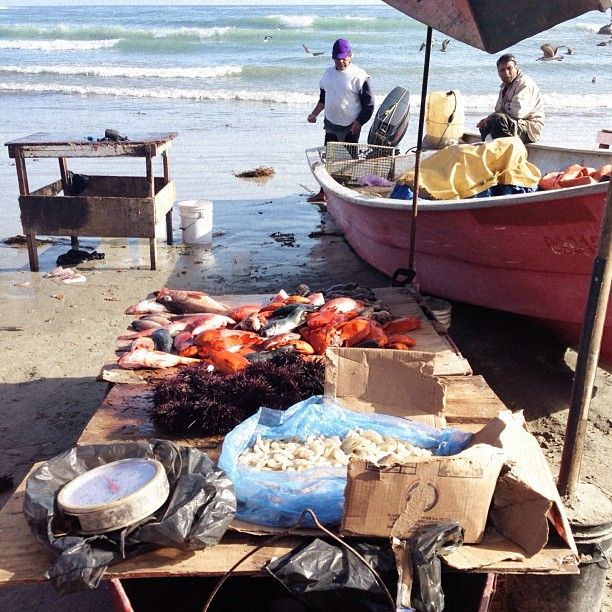 22 best images about kumiai baja california y sus for Baja california fishing
