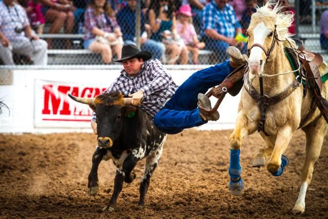 "Steer wrestling, or ""bulldogging,"" requires strength, timing and courage. Explore this timed rodeo event in detail."