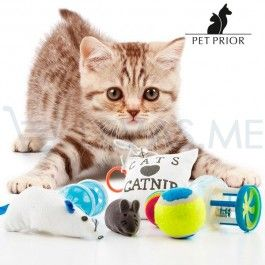 Brinquedos para gatos - Conjunto de 8