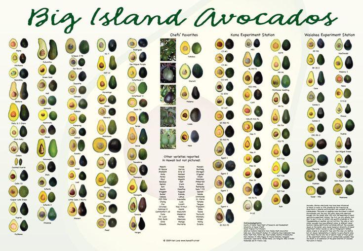 Big Island Avocados -- all 107 varieties that grow on the island of Hawai'i!