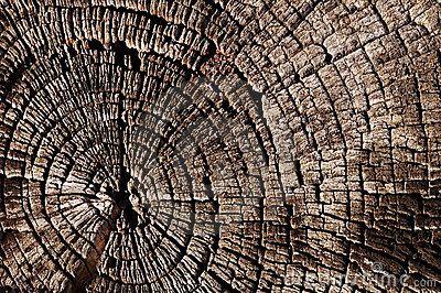 de structuur in de boomstam door de vele jaarringen is kenmerkend voor de textuur van hout.
