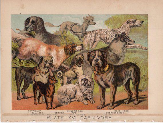 1880 Dog Breeds Lithograph Original Antique Print Wild Life