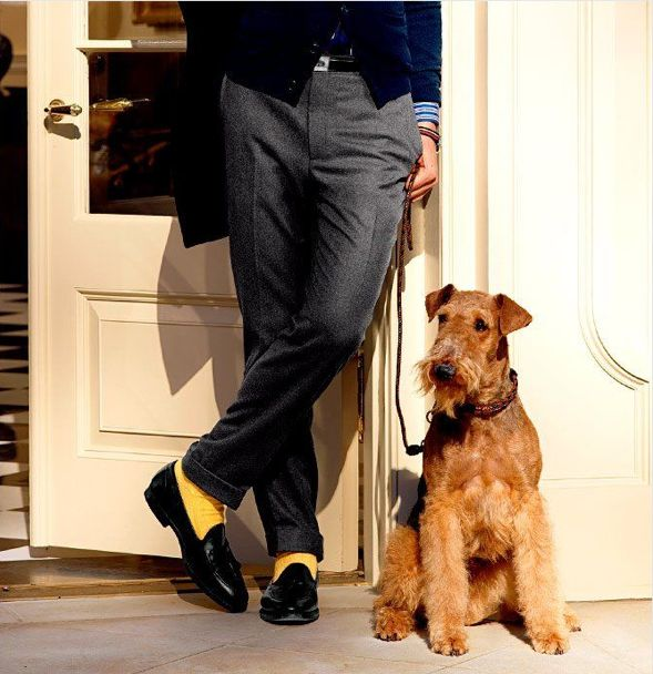 Airedale terrier #Airedale #Terrier