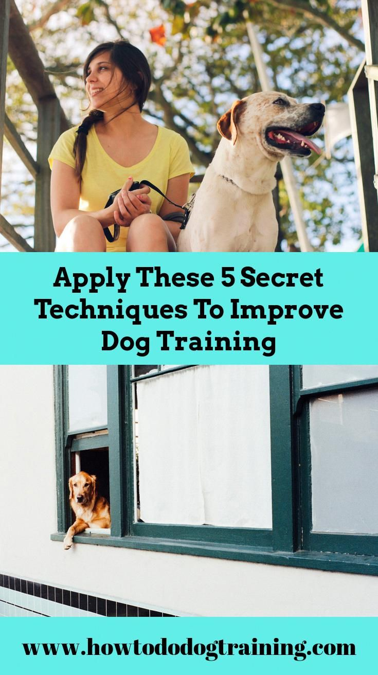 Required Aid With Puppy Training Take Into Consideration These