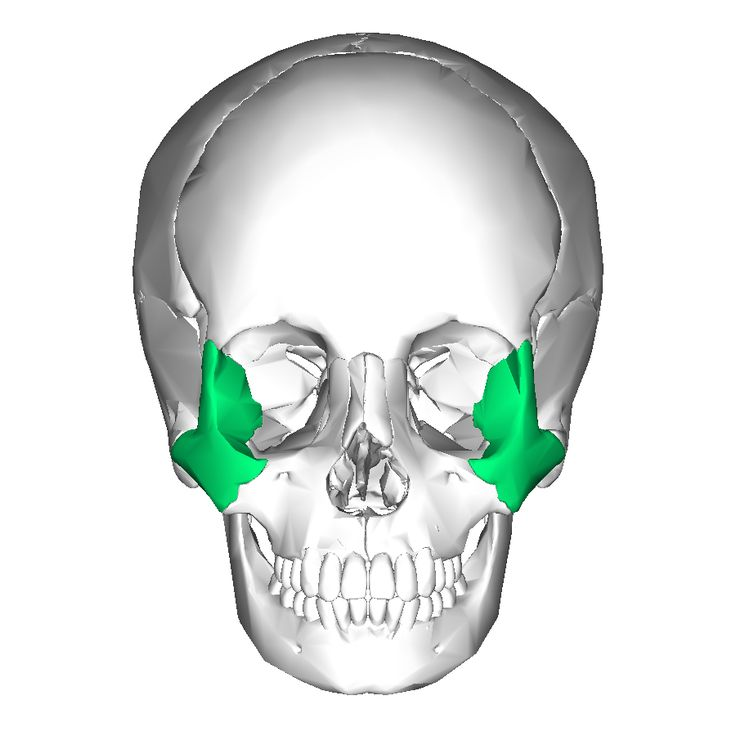 141 best bones images on pinterest | occupational therapy, bones, Sphenoid